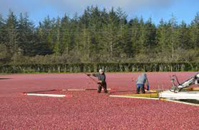 Pacific Cranberry Museum