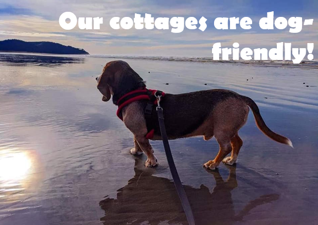 we are dog friendly